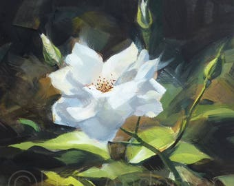 Oil Painting of a White Rose