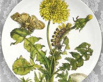 dandelion 1600's botanical melamine plate or platter