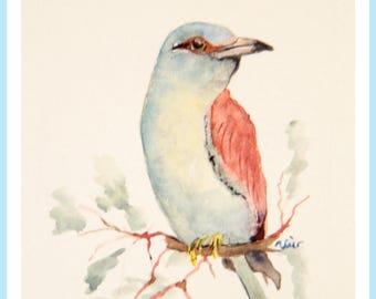 European Roller,  watercolor painting,  original mini art,  bird illustration,  small bird art,  watercolor original,