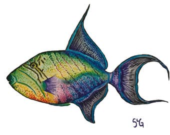Watercolor Triggerfish