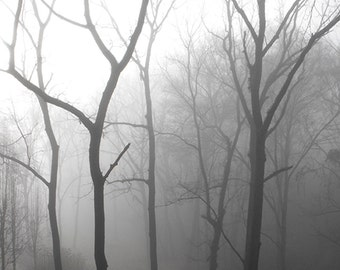 Foggy Landscape Photo - Bare Winter Black Walnut Trees in the Fog Print
