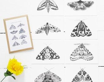Moths of Great Britain - Postcard Set