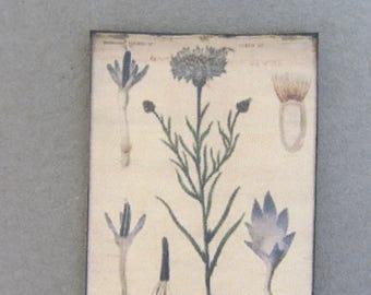 Old flower poster