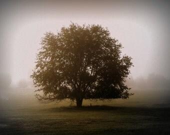 Lone Tree, Morning Mist, Fog, Misty, Foggy, Tree, Landscape, Countryside, Country Scene, Print, Photograph, Canvas Wall Art