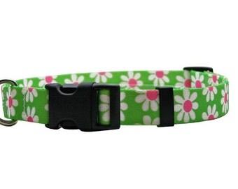 Green Daisy Standard Collar