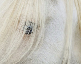 White Horse Photograph - White Stallions - Mysterious Eye - Dreamy Horse - Wildlife Horse - Animal Photograph
