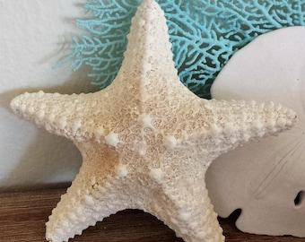 Starfish, Seashells, Shells, Beach Decor, Craft Shells, Jungle Starfish