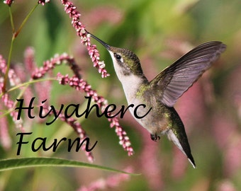 Hummingbird Photograph Wildflower Photography Nature Photography Gift Matted Photograph Wall Art Home Decor Children Decor Fine Art