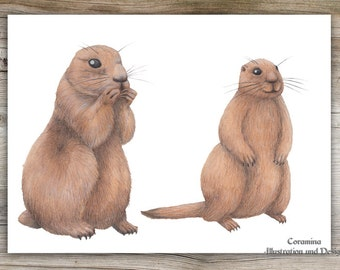 Original illustration marmot
