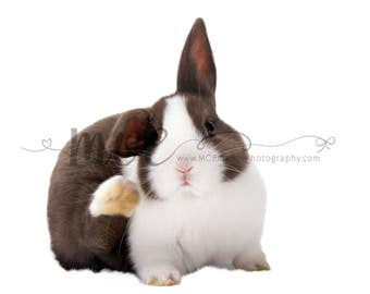 SALE Easter Animal Overlay -  Bunny Overlay - 300DPI images - PNG - Instant Download overlay - Drag and Drop Ready! - Bunny  tongue out
