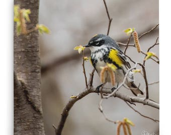 Surrounded by Spring Canvas Bird Print, Songbird Wall Art, Yellow-Rumped Warbler Picture, Gift Idea for Bird Watcher, Bird in Blooms Picture