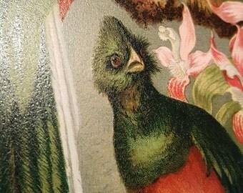 1885 Resplendent Trogon, Our Living World, L. Prang & Co., Color Chromolith Bird