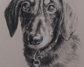 Custom Dog portrait, Pet portrait, Dog drawing, Dog Art - carbon pencil on Ingres paper  ***Lowest price is 50% DEPOSIT price***