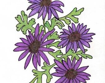 Original Art Drawing in Colored Pencils of Purple Daisies - Botanical Art