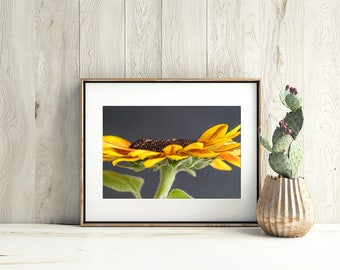 Sunflower Fine Art Wall Decor - Gift for Her - Decorate your Living space - Flower Apartment Art