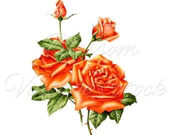 Rose Print, Floral Wall Art, Botanical Print, Flower Dorm Wall Art, Flower Print, Floral Printable VIntage Roses Print INSTANT DOWNLOAD 2502