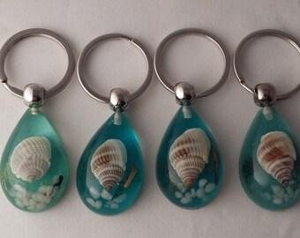 Shell Keyring, Sea Shell, Keyring, Curiosity, Oddity, Sea Shells, Beach, Natural, Keychain, Keyrings, Jewlery, Real, Keychains.