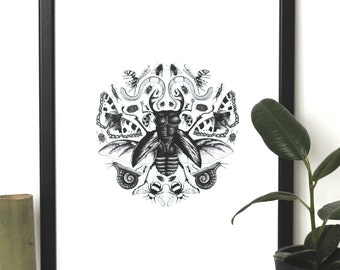 Creepy Crawlies // insects // art print// Illustration // nature