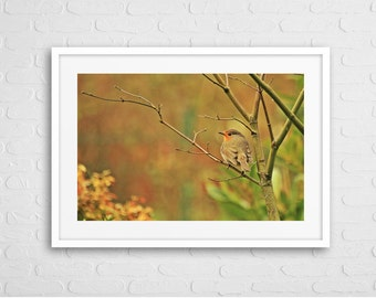 Robin in Autumn Art Photo with Frame