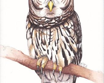 Mr. Owl Minimalistic Art Print