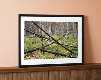 Photo of the autumn forest, Forest print, Trees print, Wall art print, Wall decor, Instant download
