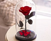 Beauty and the beast rose, forever red rose, Enchanted Rose, rose in glass, preserved roses, five year lasting rose, five year rose