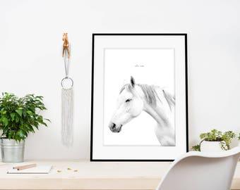 Giclee horse print, Giclee Print, Horse white print, Horse black white print, Horse photo, Horse Print, Animal giclee print, Animal print