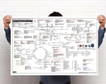 Medical Biochemistry Pathways Poster