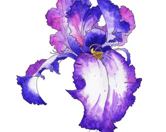 Illustration Art Print iris flowers home wall decoration archival watercolor drawing