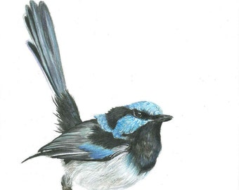 Blue Fairy Wren Coloured Pencil Drawing Print