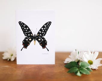 Black Butterfly Greeting Card and Note Card