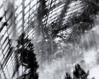 Framed Fine Art print, signed ~ botanical ~ glasshouse ~ soil