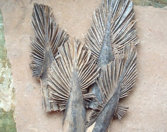 Rustic Dried Mexican Fan Palm Frond Sections Pieces Tree Shape