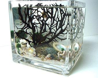 Big Square Marimo Moss Ball ZEN Mini Aquarium / Terrarium