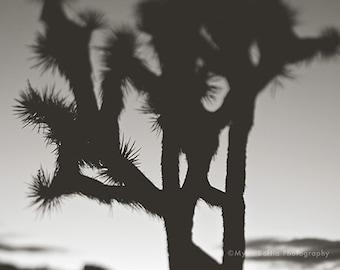 black and white Joshua Tree photograph, desert art print, minimalist decor, yucca tree photo, loft decor, Palm Springs art, surreal