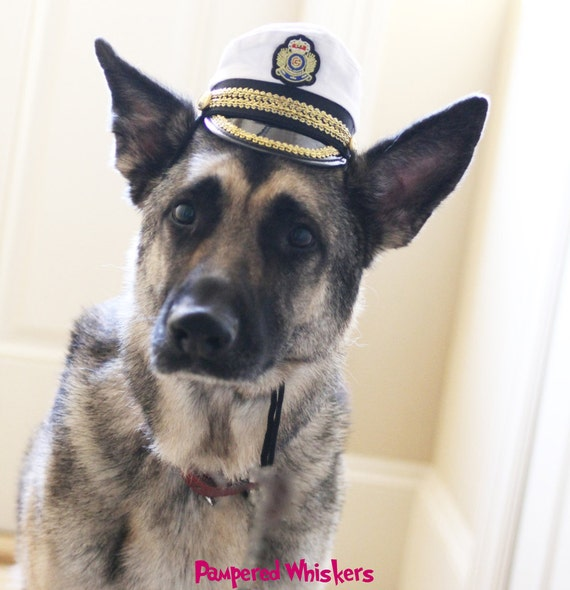 Commanding Officer Captain hat for dogs and cats