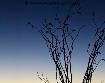Photograph Print - Silhouette Sunset to Moon Rise, Big Bend National Park TX - dusk moon night sky sunset sun crescent blue desert ocotillo