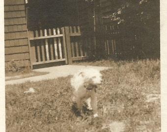 """Vintage Snapshot """"Scruffy"""" Puppy Dog Terrier Mix Rescue Dog Found Vernacular Photo"""