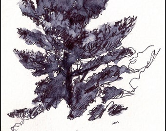 Pine tree black and white brush pen and ink, Fine art print 8.5x11 Digital illustration, Home Decor Naturalist Art, nature, decor gift idea
