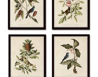 Bird and Botanical Print Set No. 5, Botanical Print Set, Vintage Bird Prints, Vintage Botanicals, Wall Art, Print, Wall Art, Bird Prints