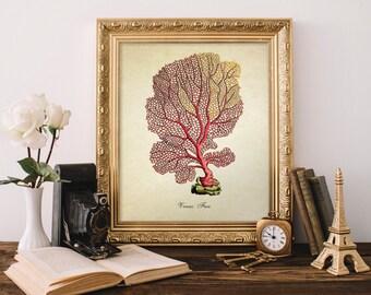 Antique Botanical Print, Coral Print, Vintage Home Decor Reproduction, Natural History Art, Colorful Coral Decorative Reproduction SL017
