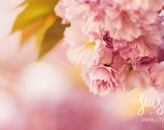 Flower Photography, Pink,  Botanical Art Print, Shabby Chic Nature Photography, Romantic Home Decor - Cherry Blossom, the wonder of you
