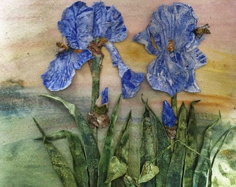 Iris's and Bees