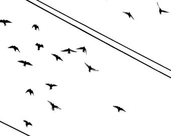 Flight, Fine art photography, Black and white photography, silhouettes of flying birds