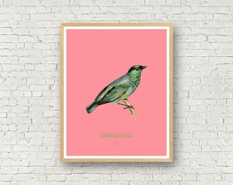 Bird wall art, digital art, Spring, Green and pink, Typography, Poster, Prints, Birds, Nursery, male female, colorful bird, download