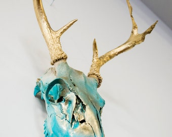 WhiteTail Buck Skull