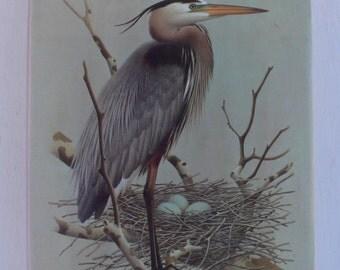 vintage birdbook, The Birds of Indiana, 1984, paintings by William Zimmerman, from Diz Has Neat Stuff
