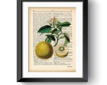 Grapefruit print-kitchen wall art-grapefruit dictionary print-grapefruit wall art-wedding gift-home decor-fruits print-NATURA PICTA-DP172