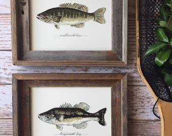 2 FRAMED BASS, Largemouth Bass and Smallmouth Bass, 2 fish prints with frames, 8x10 or 11x14