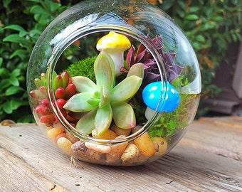 Succulent terrarium & fairy garden mushrooms/succulent terrarium/hanging planter/succulent garden/succulent wedding decor/party favor/mini